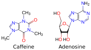 1280px-Caffeine_and_adenosine.svg