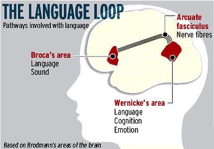 Language-loop-cognitive-benefits