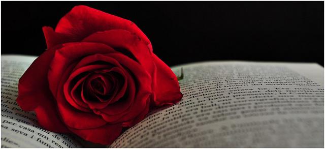rosa-i-llibre