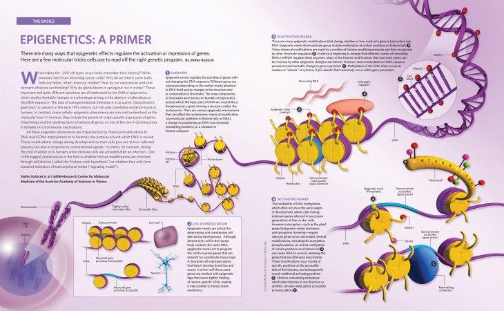 epigenetics_primer