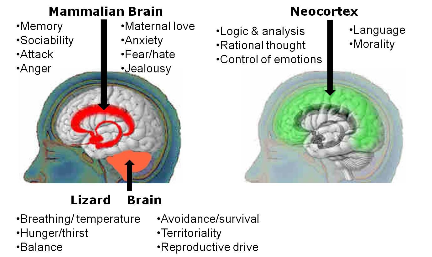 junio | 2015 | Feel the Brain