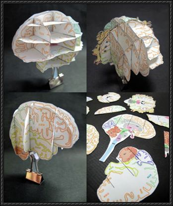Brain-Atlas-Paper-Craft