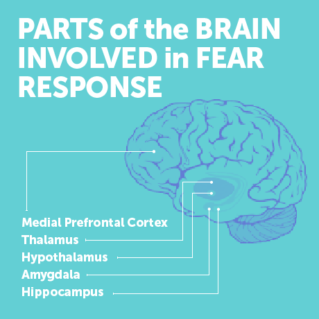 edutopia-ramierez-sci-of-fear-brain