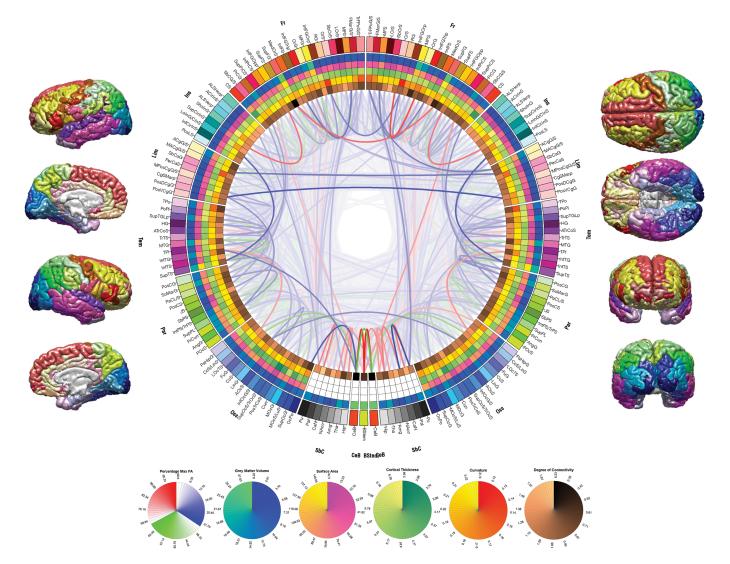 interconnected-brain