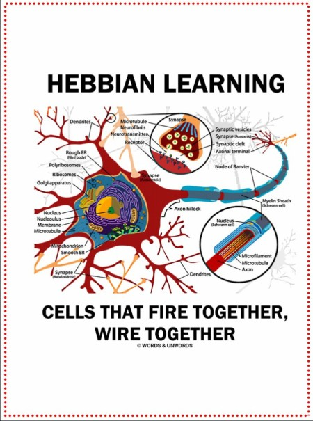 hebbian_learning_cells_that_fire_together_wire_notebook-rff809f164fcd414bbf1d04af6958c227_vyut2_1024