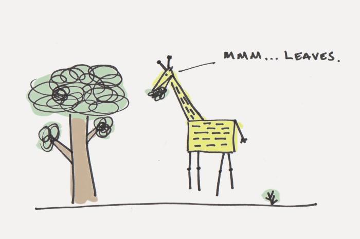 giraffe-700x466