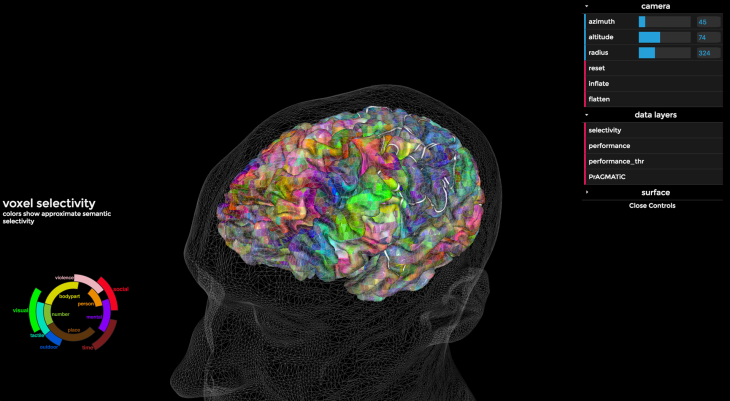 En los colores de la imagen podemos ver dónde nuestro cerebro almacena el lenguaje relacionado con diferentes semánticas.
