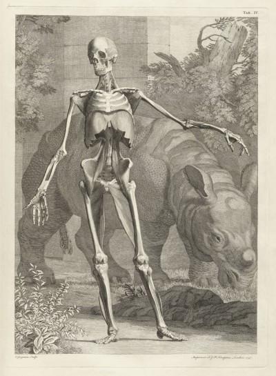 El Rinoceronte Clara