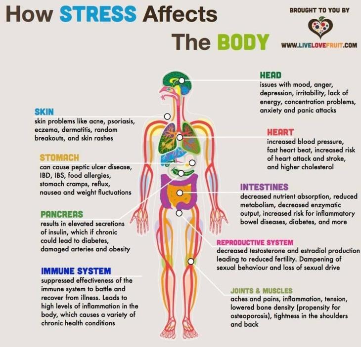 Efectos del Stress en el Cuerpo
