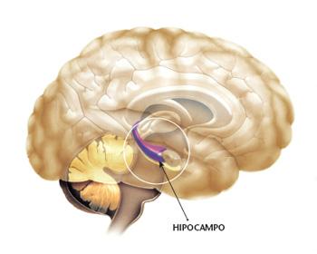 El Hipocampo