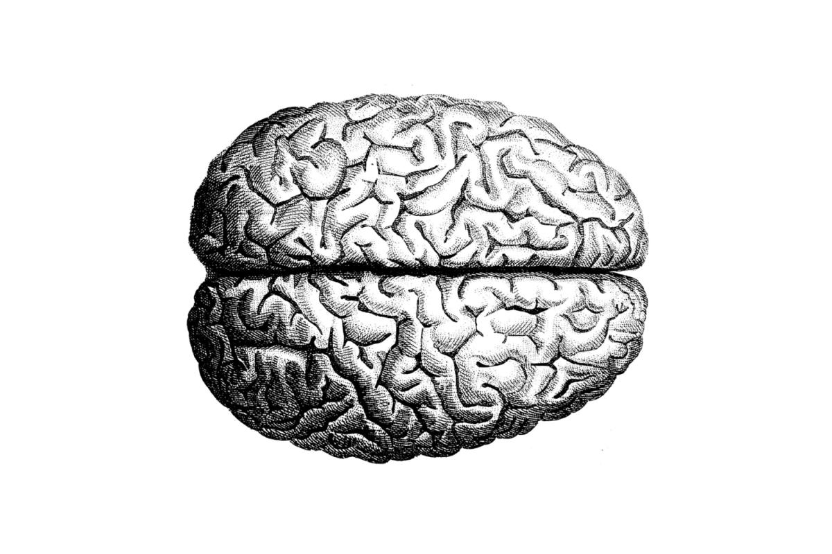 El Cerebro Vacío, un Ensayo