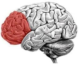 Córtex Prefrontal