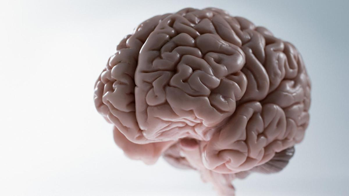 ¿Qué Porcentaje del Cerebro Usamos?