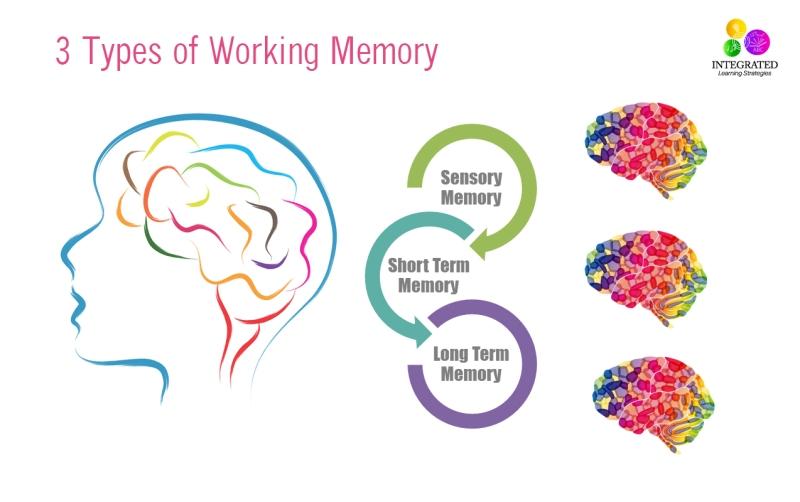3 Tipos de Memoria de Trabajo: