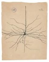 La Neurona Piramidal del Córtex Cerebral