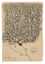 Una Neurona de Purkinje del Cerebro Humano