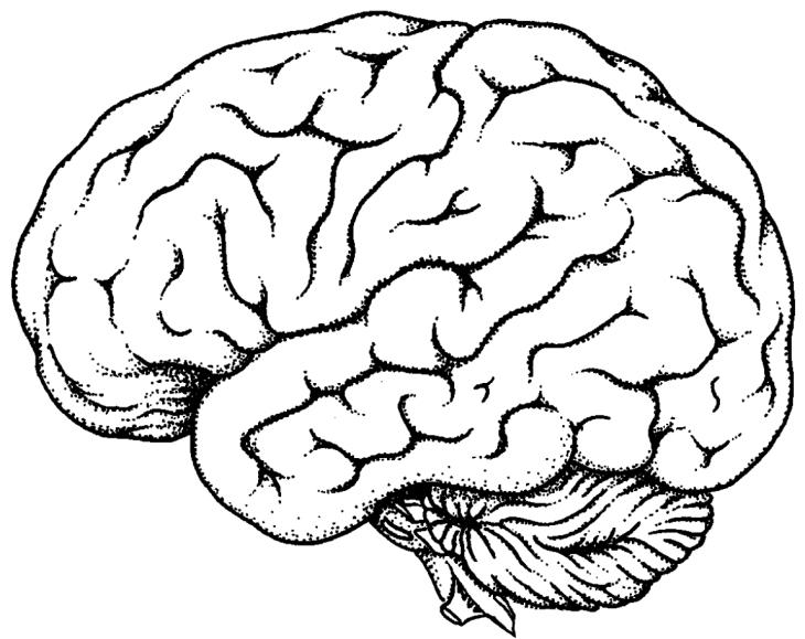 Feel The Brain La Máquina Más Compleja Página 22