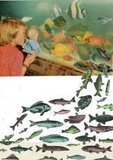 68154-5932081-Fish