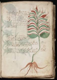 manuscrito007