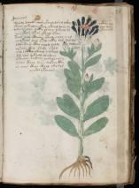 manuscrito035