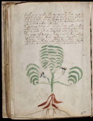 manuscrito118